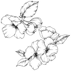 Vector Apple blossom floral botanical flower. Black and white engraved ink art. Isolated flowers illustration element.