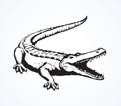 Crocodile. Vector drawing