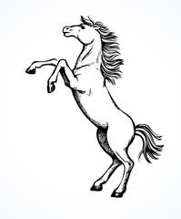 Horse began to buck. Vector drawing
