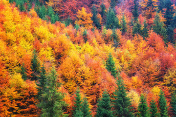 Color palette of the autumn, autumnal colorful trees, natural outdoor background