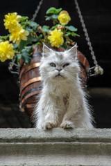 Cat of Catalunia