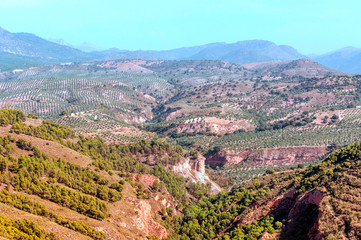 Forests of the Spanish city of Granada with views of the city