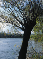 Wisla river near Annopol, Jozefow and Basonia, lubelskie region, Poland