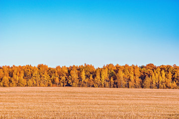 Autumn view of the forest by the meadow.