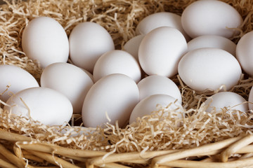 farm white eggs in straw