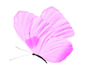 purple butterfly isolated on white background