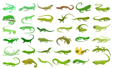 Lizard icons set. Cartoon set of lizard vector icons for web design