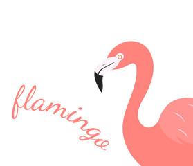 Flamingo bird portrait over white background.