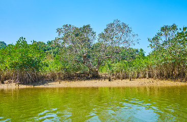 Midday in mangrove forest, Kangy river, Myanmar