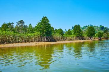 Explore the mangroves, Kangy river, Myanmar