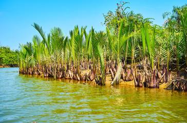 Nipa palms on low tide, Kangy river, Myanmar