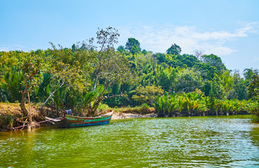 Jungle on the Kangy river's bank, Myanmar
