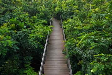 Wood bridge pass through the forest.