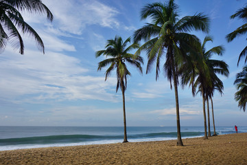 Palm trees on the beach in Togo