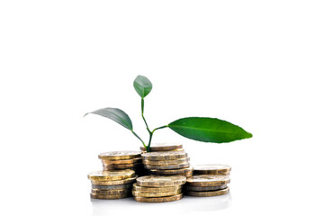 Money, plant and the concept of investment growth. Finance and savings.