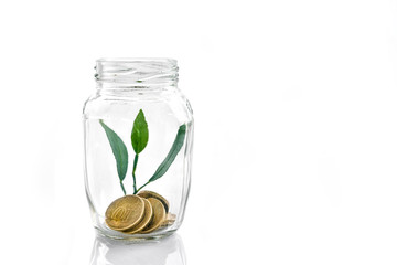 Storage and growth of money in the Bank. Investment and Finance.