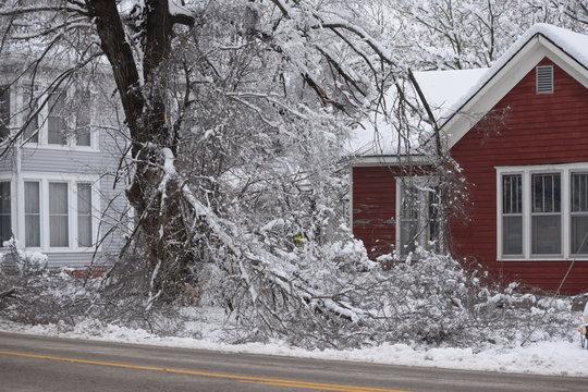 Snow Storm Damage