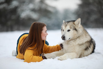 Girl is lying in snow next to a dog Alaskan Malamute and hugs his for a walk.