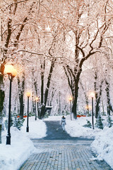 Winter city park landscape. Frosty trees covered with snow in park. Snow falling background