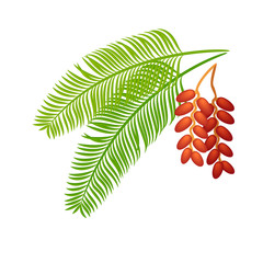 Date palm isolated leaf. Dates branch. Tropical exotic fruits and plants. Iftar food.1