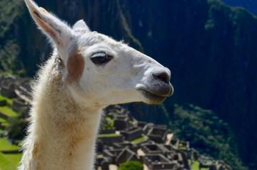 Foto de perfil de uma llama em Machu Picchu