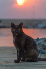 ugly stray cat in front of sunset view