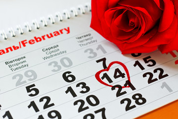 red rose lay on the calendar with the date of February 14 Valentine's day
