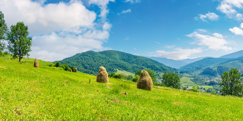 haystacks on a grassy hill in summer. beautiful summer landscape in mountains. carpathian countryside at noon. wonderful weather with some fluffy clouds on the blue sky. village down in the valley