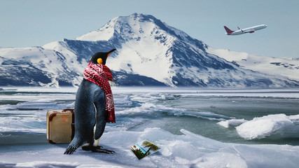 Reiselustiger Pinguin verpasst den Ferienflieger