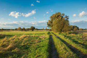 Road through a meadow, big trees, horizon and white clouds in the sky