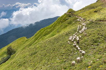 Flock of sheep on mountains against cloudy sky at Annapurna Conservation Area