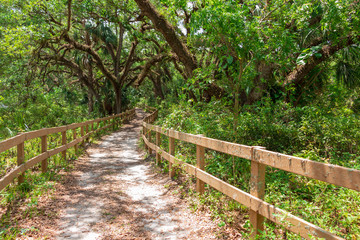 Pathway through live oak hammock trail, forest - Long Key Natural Area, Davie, Florida, USA