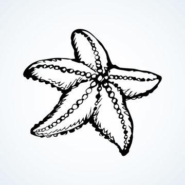 Starfish. Vector drawing