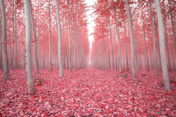 Scenic view of trees amidst pink fallen leaves in forest during autumn