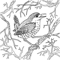 Wren on branches black and white vector illustration engraving
