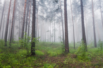 Trees growing on field in forest during foggy weather