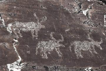 Close-up of petroglyphs on rock at Elangash valley