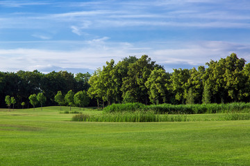 the landscape of hilly glade in the background reeds and tall deciduous trees and a blue sky with clouds.