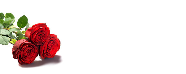Red roses, isolated on white background, Valentine' day