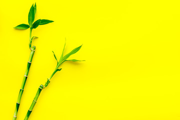 Asia background. Chinese, japanese background. Bamboo branch on yellow background top view space for text