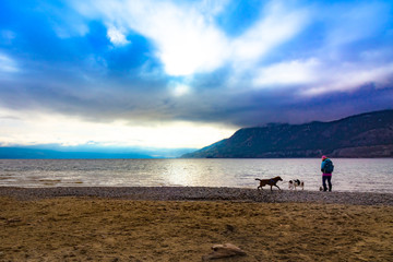 dogs play on the beach in january