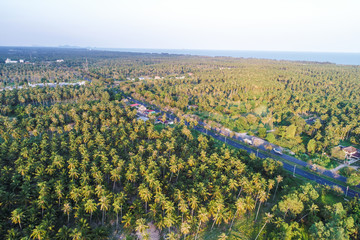 Aerial view road in deep coconut forest