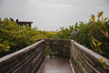 Bird on the Boardwalk at the Marsh