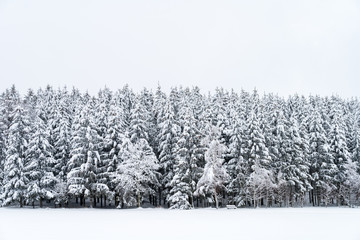 Snowy pine trees with bench on a winter landscape