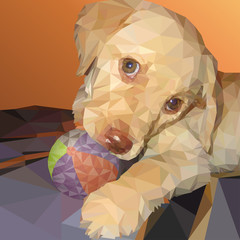 Labrador puppy in low poly style