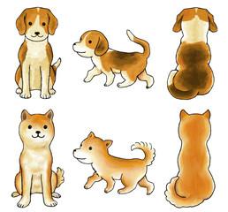 写真の検索 土佐犬
