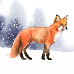 Fototapete - Hand-drawn fox in the snow watercolor style