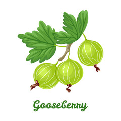 Gooseberry isolated on white background. Vector illustration of a branch with berries and green leaves in cartoon flat style.