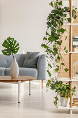 Urban jungle in natural living room with grey Scandinavian couch and ivy in pot on bookshelf
