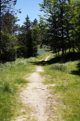 Lac des Pises en forêt de Lingas